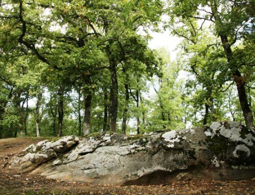 Έξι μήνες παράταση για υποβολή αντιρρήσεων για τους δασικού χάρτες