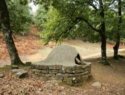 ΑΜΦΙΛΟΧΙΑ: Ανάκληση και επανασχεδιασμό των δασικών χαρτών ζητά ομόφωνα το δημοτικό συμβούλιο
