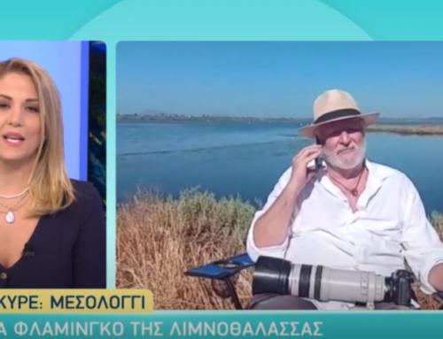 """ALPHA Παντού"" ζωντανά από το Μεσολόγγι με εικόνες των φλαμίνγκο από τον ""φακό"" του Βασίλη Αρτίκου  (VIDEO)"