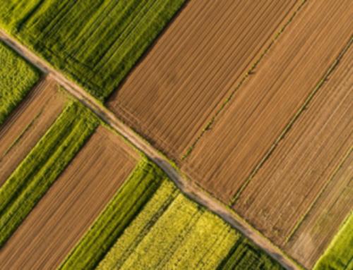 Το Μηνιαίο Ενημερωτικό Δελτίο Τιμών Αγροτικών Προϊόντων από την Τράπεζα Πειραιώς (ΦΕΒΡΟΥΑΡΙΟΣ  2021)