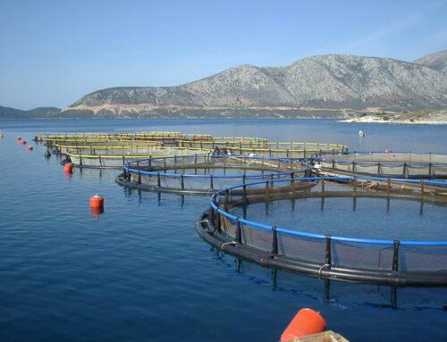 Διαδικτυακό συνέδριο για την αλιεία μικρής κλίμακας και τις υδατοκαλλιέργειες – Ευρωπαϊκού Έργου Interreg – Adrion ARIEL Cod. 278