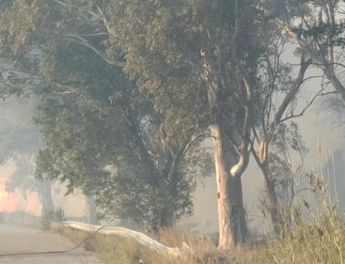 Πυρκαγιά σε καλαμώνες στο Κρυονέρι απείλησε σπίτια – Μεγάλη κινητοποίηση της Π.Υ. Μεσολογγίου