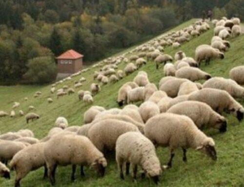 Ο Σπ. Λιβανός υπέγραψε τις συνδεδεμένες ενισχύσεις για βοοειδή και αιγοπρόβατα
