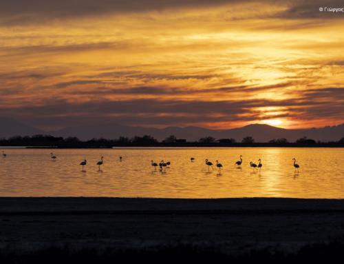 Με τιμητικό έπαινο η συμμετοχή του Γιώργου Ντέκα στον διαγωνισμό φωτογραφίας «Click στη φύση»