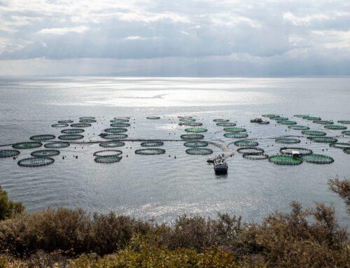 Τα κράτη-μέλη της Ε.Ε. κρατούν το κλειδί για την ανάπτυξη της υδατοκαλλιέργειας